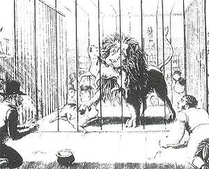 Lion-baiting - Wikipedia