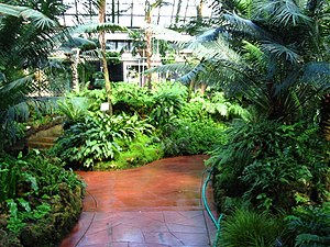Lincoln Park Conservatory - The Fernery