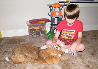 Flemish Giant rabbit - A sandy doe with a well-developed dewlap