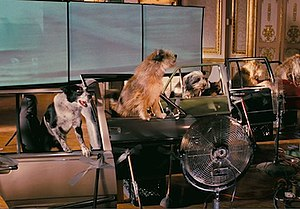 Hotel for Dogs (film) - The dogs sit in replicas of cars surrounded by fans that simulate driving on a highway with the wind blowing.