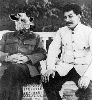 Stalin-Cow