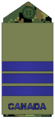 Air Force olive LCol.png