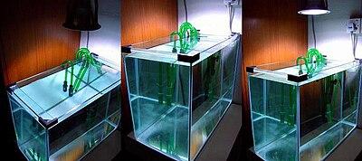 Marine aquarium wikipedia a diy metal halide pendant lamp mozeypictures Images