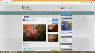 iSpot citizen science project