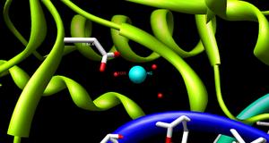 HindIII - Image: Bgl II catalytic site 2