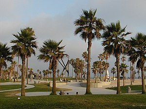 Palm trees along the Venice Boardwalk