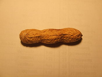 Three-lobbed peanut