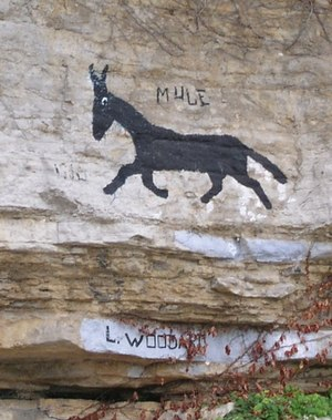 And Her Name Was Maud - The Allen Bluff Mule