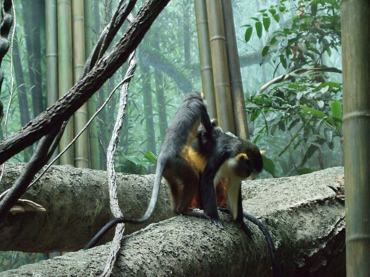 File Bronx Zoo 033 Jpg Wikipedia