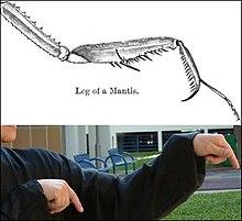 Wudang mantis fist photo 133