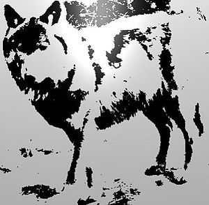 Wolf and shadow