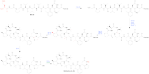 Bottromycin - Bottromycin biosynthetic pathway proposed by Crone, et al.