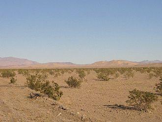Dumont Dunes - Ground view of Dumont Dunes.