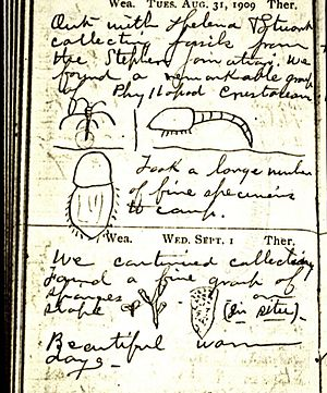 Phyllopod bed - A page of Walcott's field notebook, depicting some familiar fossils from the Phyllopod bed