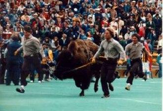 Ralphie the Buffalo - Ralphie II served 1978–87