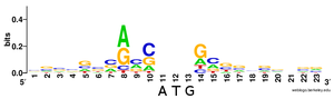 Kozak consensus sequence -  A sequence logo showing the most conserved bases around the initiation codon from 10 000 human mRNAs.