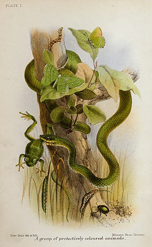Animal Coloration (book) - Plate I, A group of protectively coloured animals.