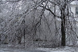 Destruction of tree limbs due to ice storm