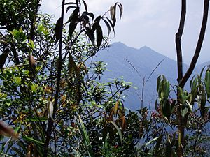 Mount Belumut - view from gunung belumut summit