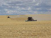 Combining wheat in Washington.