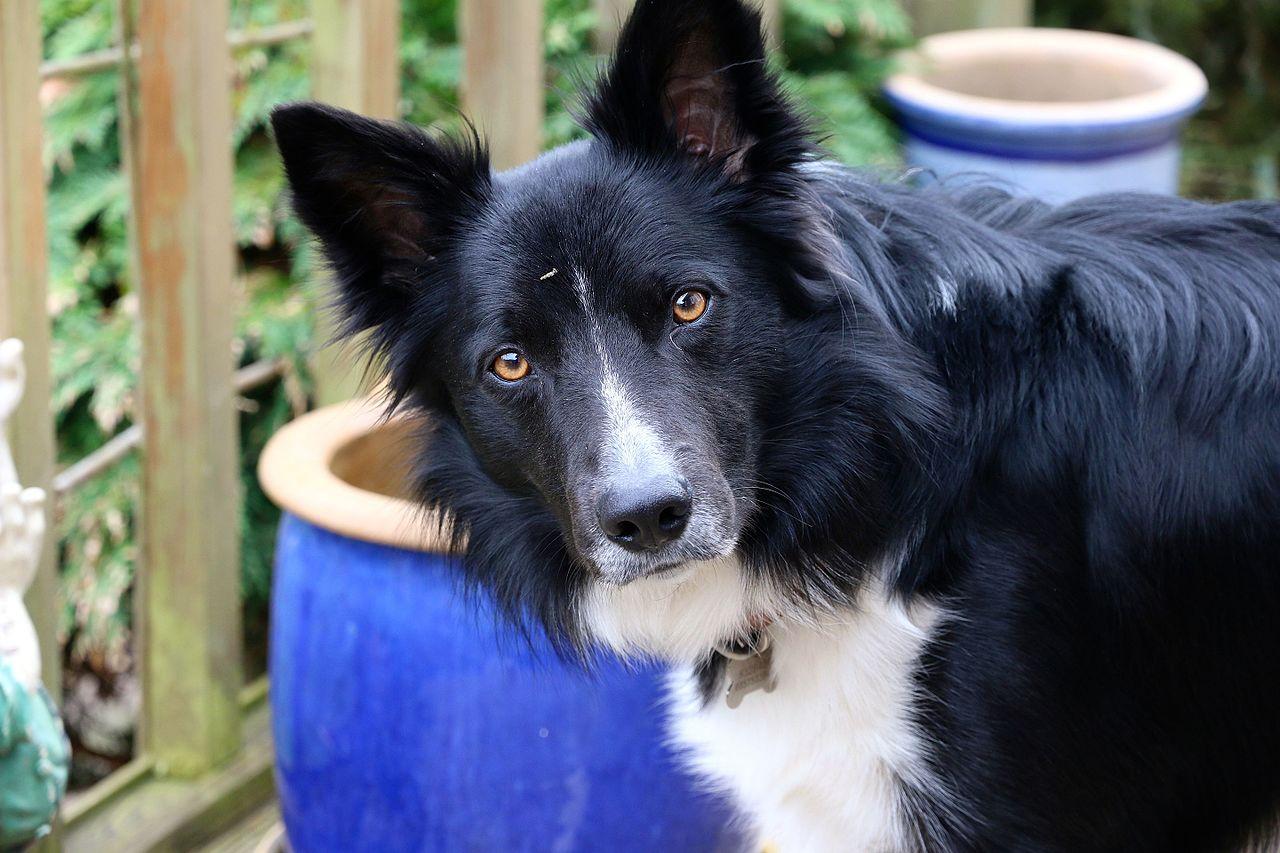 Adopted Small Female Dog Lift Her Leg Adoption