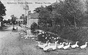 Pond with a large number of white ducks swimming in it and standing on grass around it.