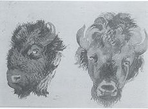 Vincent Colyer - Study of Buffalo Heads by Vincent Colyer (undated, private collection)
