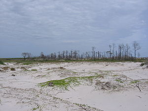 Petit Bois Island (Mississippi) - Dead trees in 'Little Woods' section of Petit Bois Island