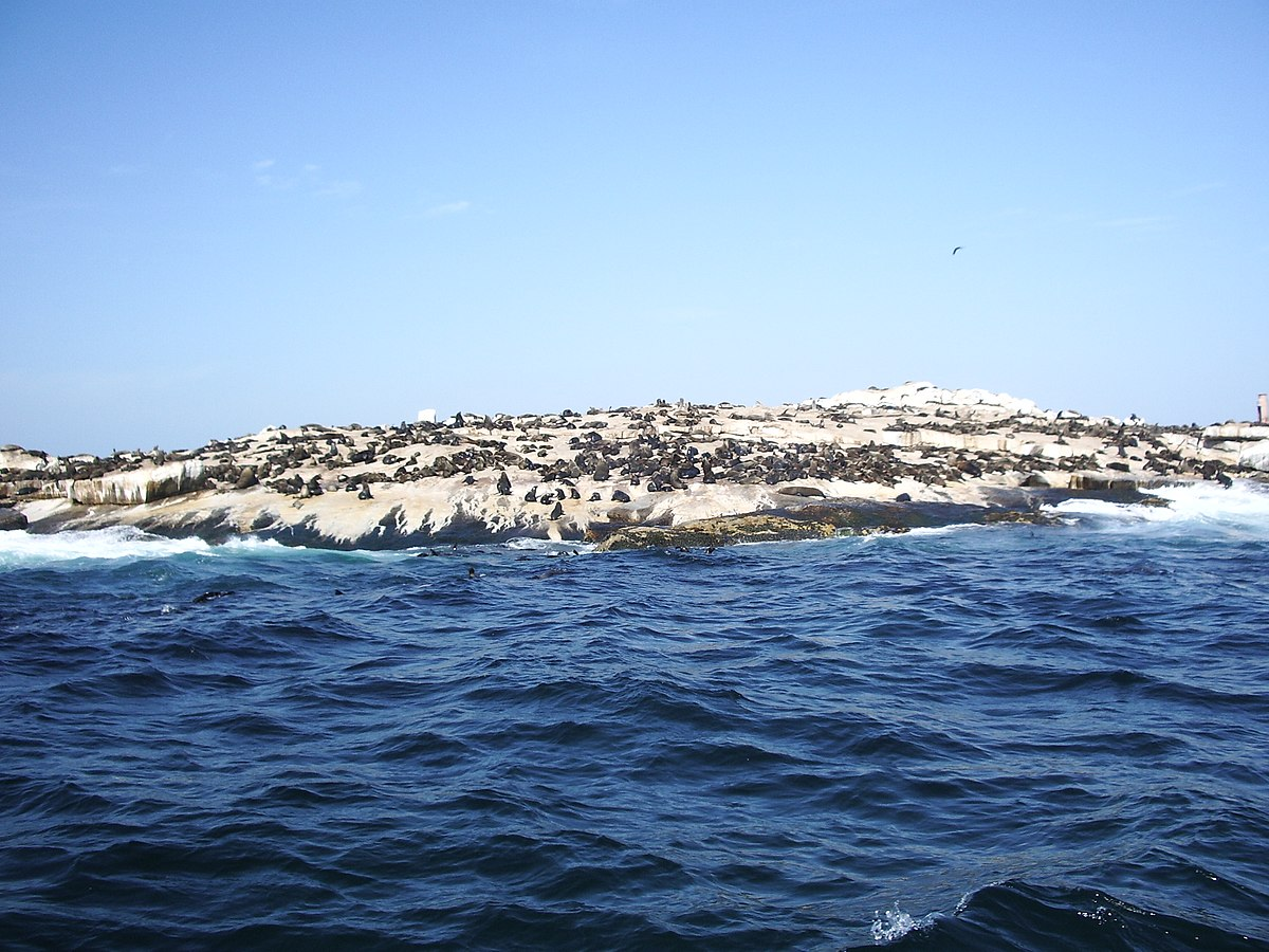 Seals On Long Island Beaches