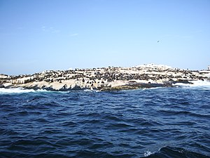 Seal Island, South Africa - The island photographed from the water. A large number of seals can be seen on its surface.