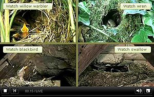 Springwatch - The Springwatch 2009 webcam console