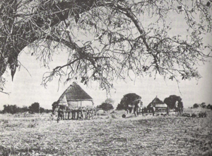 Dinka people - An example of rainy season temporary settlements—note the stilts upon which the huts are built to protect against periodic flooding of the region.
