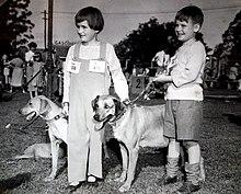 Gay Dog Kennels Alresford