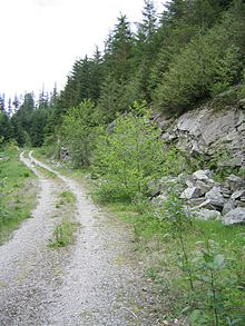 A photogrpoh of a steep logging road climbing through a forest