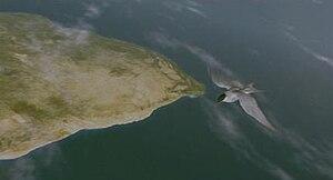 Winged Migration - Image: Winged Migration CGI