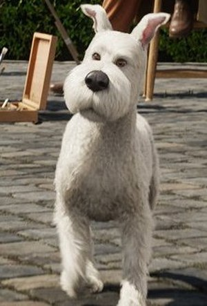 Snowy (character) - Snowy as he appears in Steven Spielberg's 2011 motion capture feature film The Adventures of Tintin: The Secret of the Unicorn
