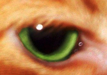 A closeup of a cat's eye, showing green iris a...