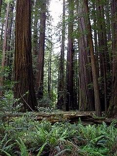 Image Result For South Redwood Road