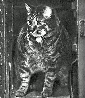 """Tibs the Great British Post Offices """"number one cat"""""""