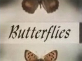<i>Butterflies</i> (TV series) television series