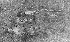 Foibe massacres - 4 November 1943: next to the Foiba of Terli are decomposed corpses of Albina Radecchi (A), Catherine Radecchi (B), Fosca Radecchi (C) and Amalia Ardossi (D)