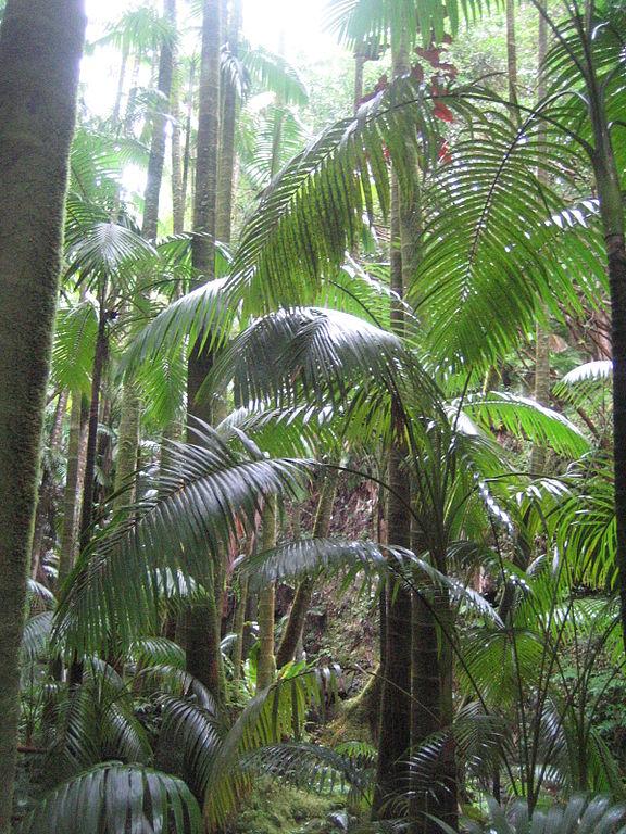 File Hawaii Big Island Hawaii Tropical Botanical Wikipedia