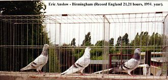 Tippler - Eric Anslow, 21:21 in 1994