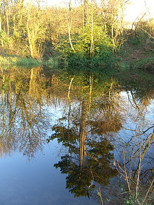Glenfield, Leicestershire - Pond at Gynsills Nature Reserve