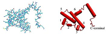Line and cartoon representation of a IFN-γ monomer