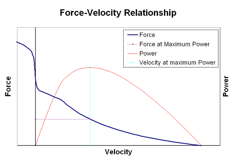 explain the relationship between resistance and velocity of shortening