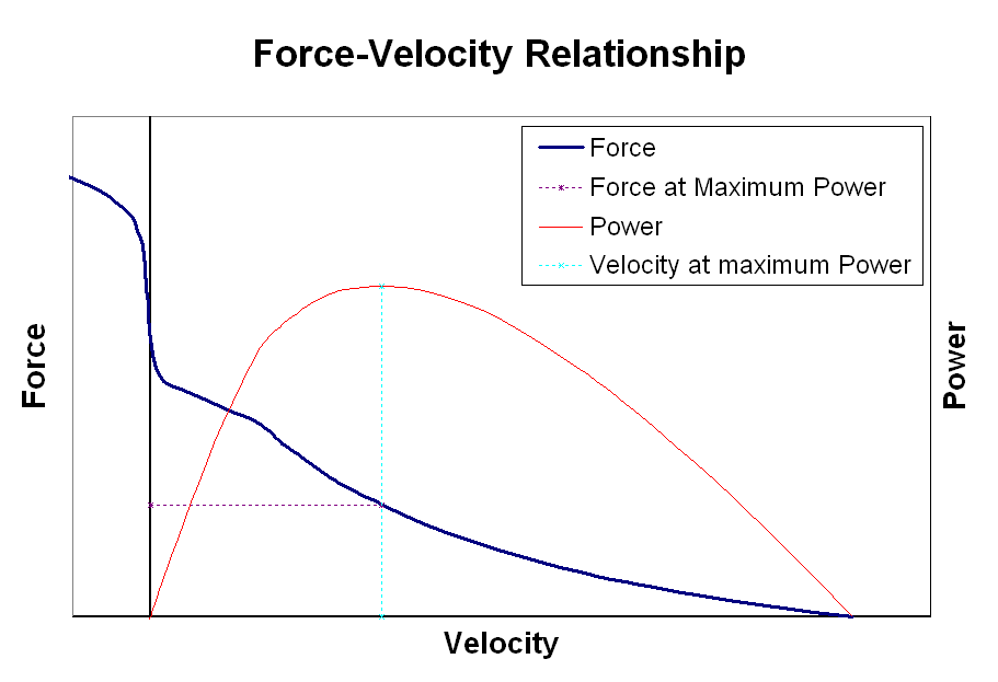 Muscle Force Velocity relationship