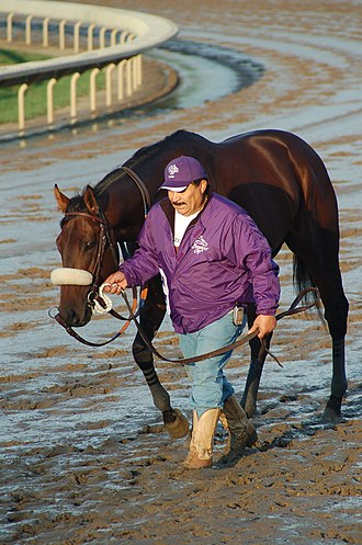 Tiago (horse) - Tiago is led by Shirreff-barn foreman Frank Leal to the paddock for the Breeders' Cup Classic.