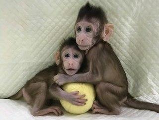 Zhong Zhong and Hua Hua Worlds first cloned primates (born 2017)