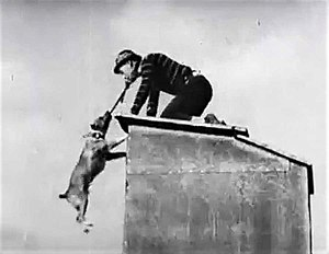Luke the Dog - Luke catches Al St. John on a rooftop and refuses to let go of him in Fatty's Faithful Fido, 1915.